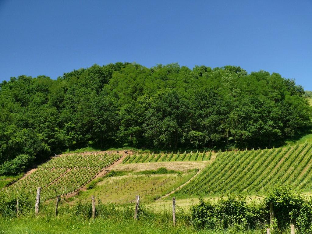 Le vigne d'Irouléguy