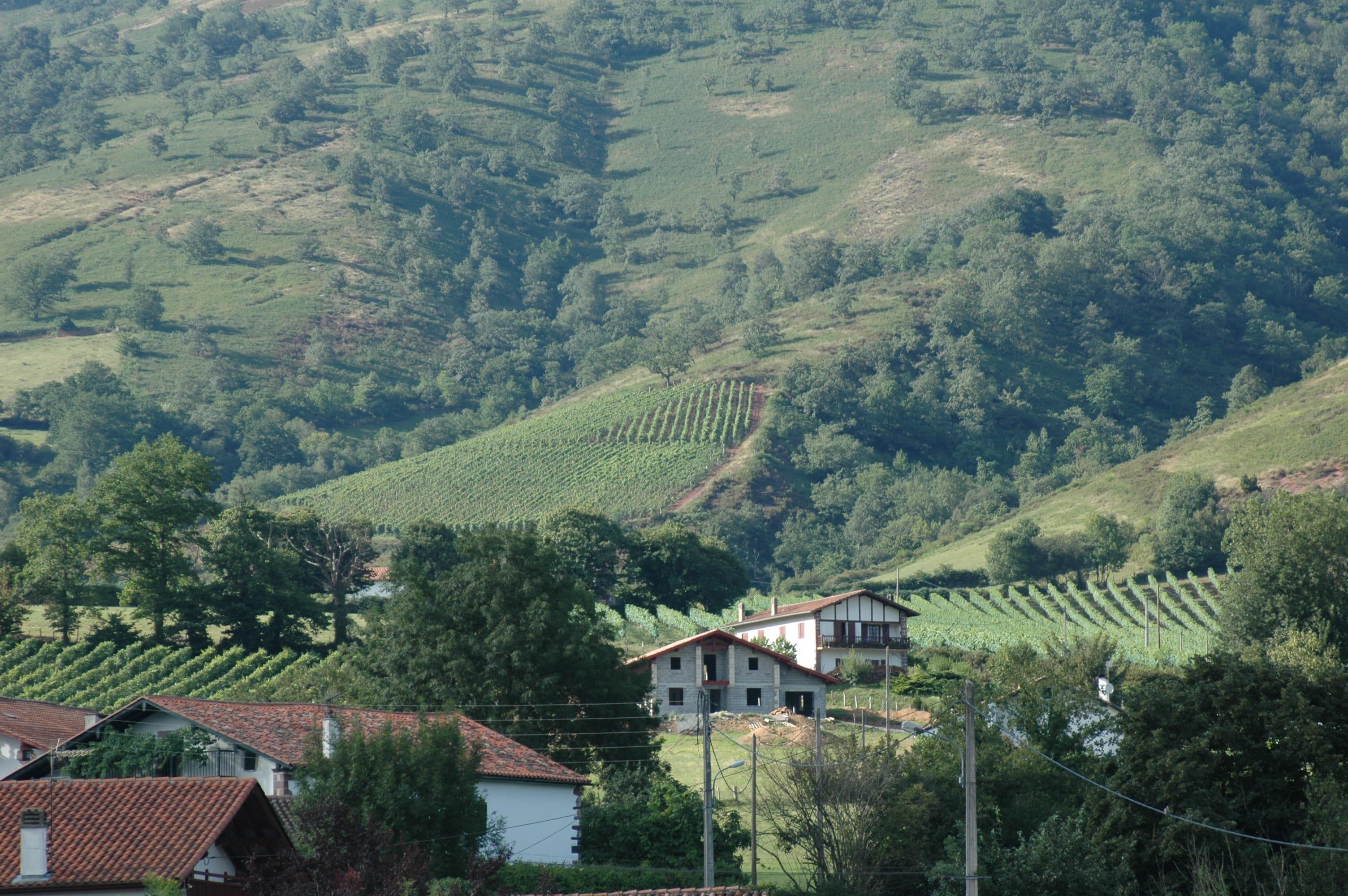 Vignoble du pays basque